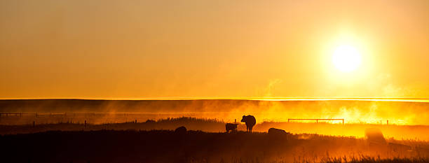 Cattle Silhouette Panorama Wall Art