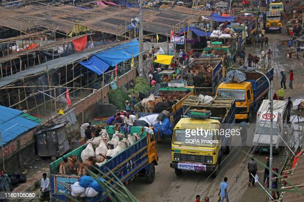 Cattle traders gather in Dhaka as they try to sell livestock to customers ahead of the annual Muslim Eid alAdha holiday Muslims across the world...