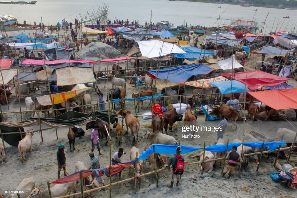 Cattle Market For Eid al Adha