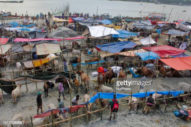 Cattle traders gather in Dhaka Bangladesh on August 15 2018 on August 15 as they try to sell livestock to customers ahead of the annual Muslim Eid...