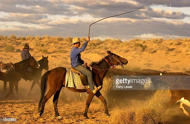 Cattleman Ken Oldfield cracks his stockwhip on the Great Australian Outback Cattle Drive, a reenactment of the historic cattle drives May 29, 2002 in...