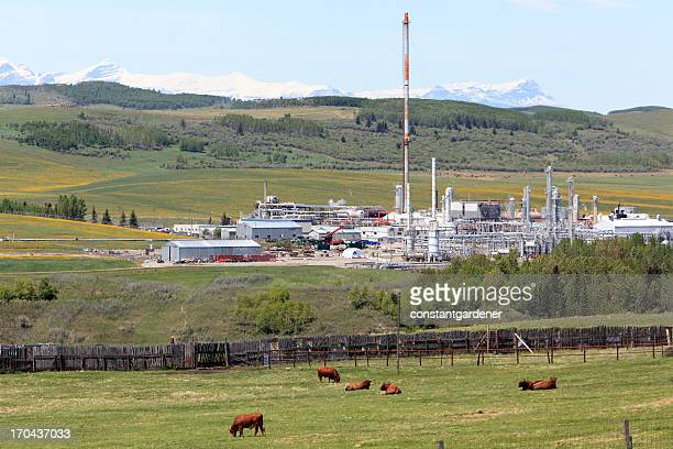Cattle,Oil Industry,And Agriculture Working Together In Harmony