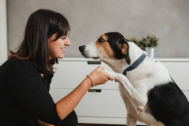 caucasian adult woman with her dog at home giving the paw
