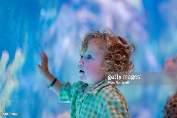 Caucasian baby boy admiring fish in aquarium