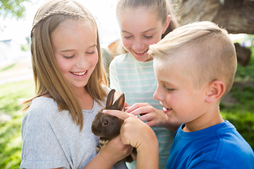 Caucasian boy and girls petting rabbit - gettyimageskorea