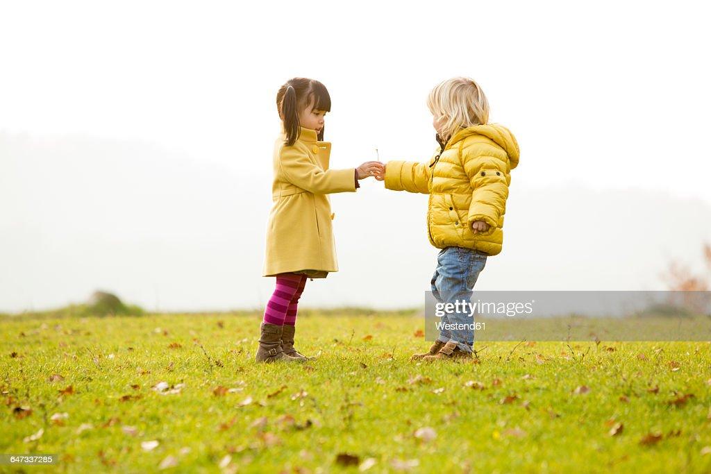 caucasian boy and vietnamese girl giving a flower stock photo