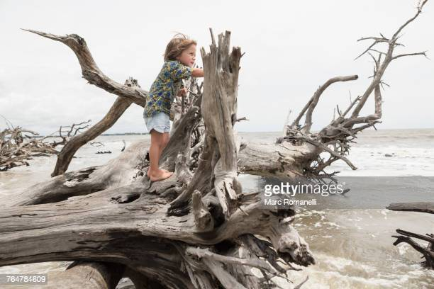 Caucasian boy climbing on driftwood on beach