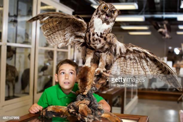 Caucasian boy examining owl specimen in museum