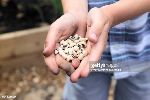 caucasian boy holding black eyed peas in garden - black eyed peas food stock pictures, royalty-free photos & images