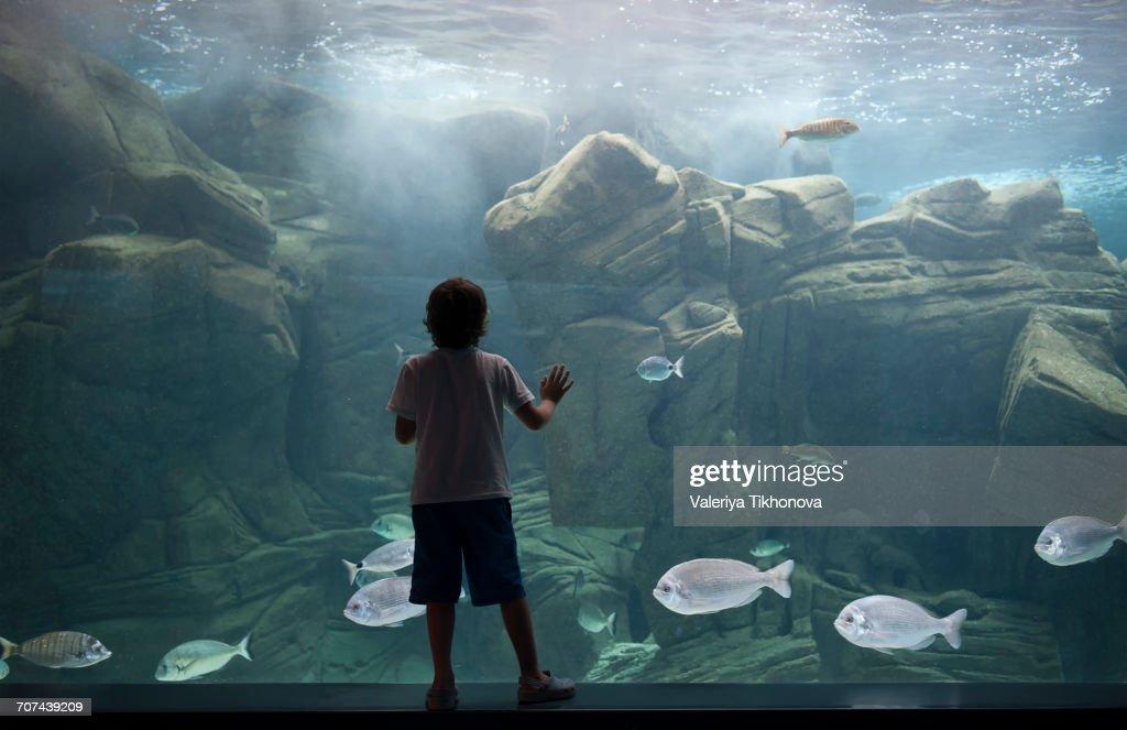 Caucasian boy leaning on aquarium tank watching swimming fish : Stock Photo