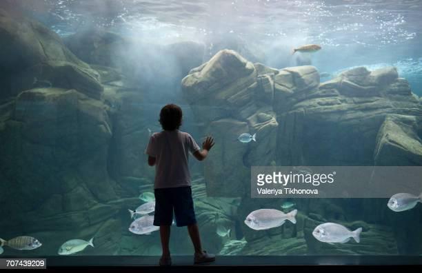 caucasian boy leaning on aquarium tank watching swimming fish - aquarium haustierbedarf stock-fotos und bilder