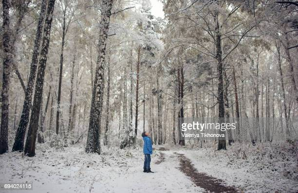 Caucasian boy looking up in snowy forest