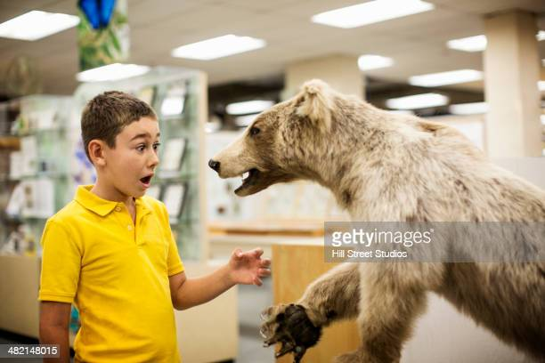 caucasian boy surprised by stuffed bear in museum - tensed idaho stock photos and pictures
