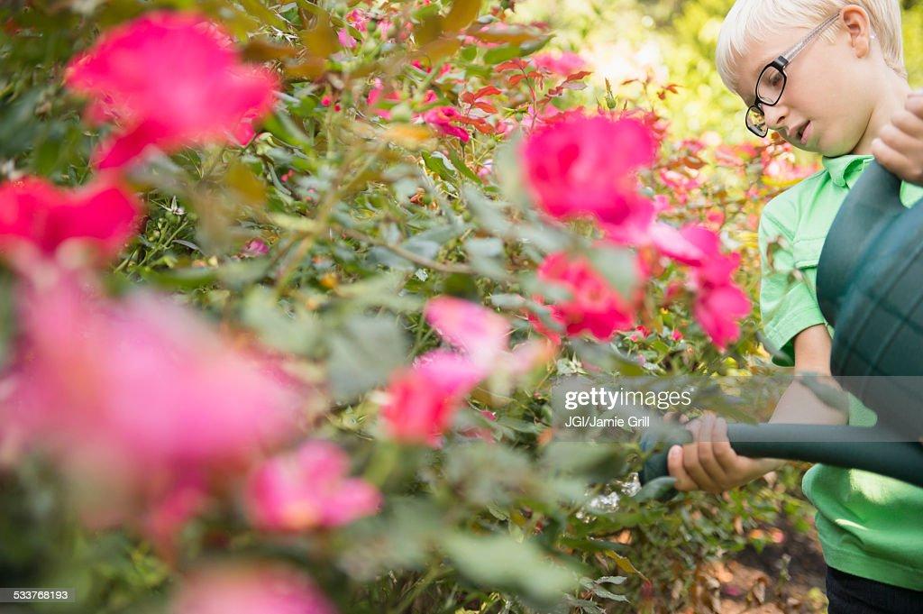 Caucasian boy watering flowers : Foto stock