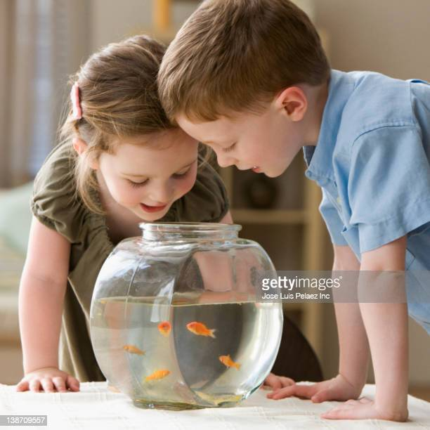 Caucasian brother and sister looking into fish bowl