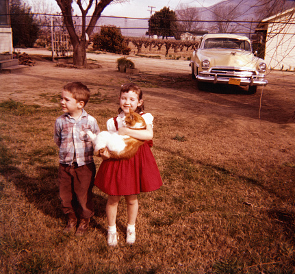 Caucasian brother and sister standing in yard holding cat - gettyimageskorea
