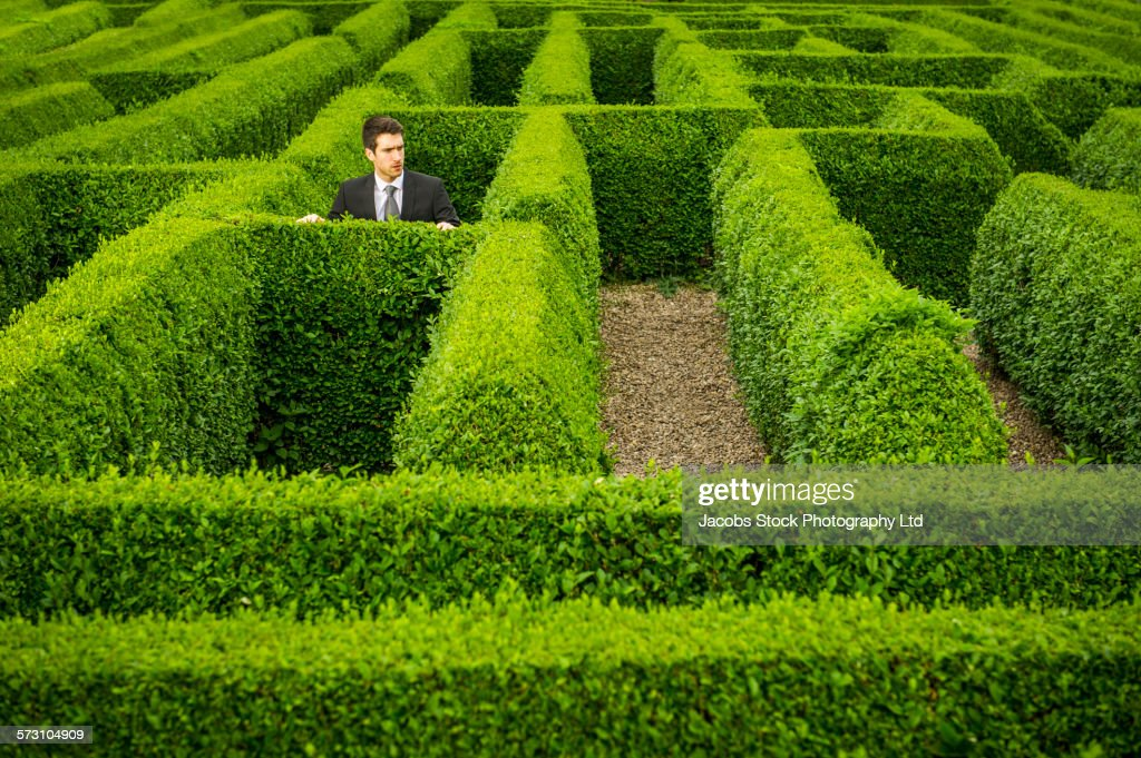 Caucasian businessman trapped in hedge maze : Stock Photo