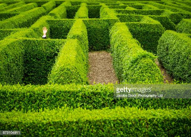 Caucasian businessman waving for help in hedge maze