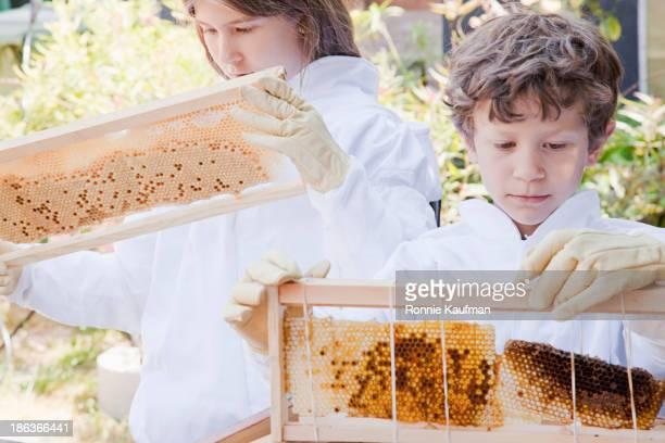 Caucasian children examining bees on honey farm