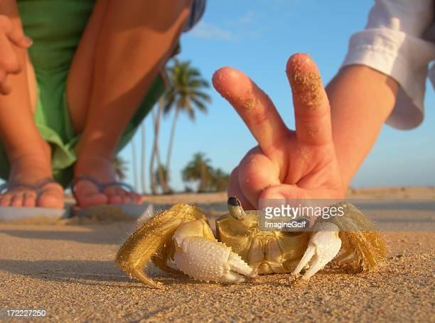 Caucásicos niños jugando con cangrejo en la playa