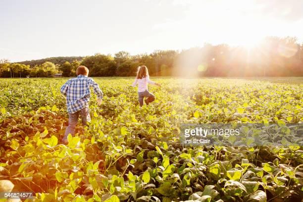 caucasian children walking in crop field on farm - nebraska stock photos and pictures