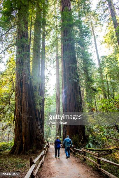 caucasian couple walking on fenced dirt path under tall trees - muir woods stock photos and pictures