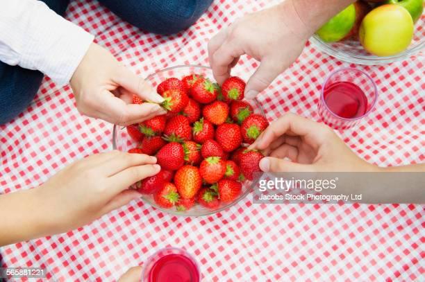 Caucasian family eating strawberries at picnic