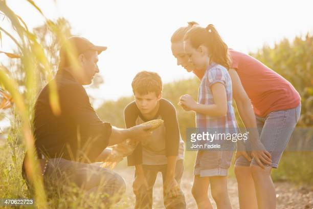 Caucasian family examining corn crop on farm