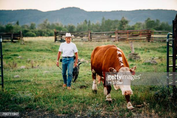 Caucasian farmer and dog walking with cow