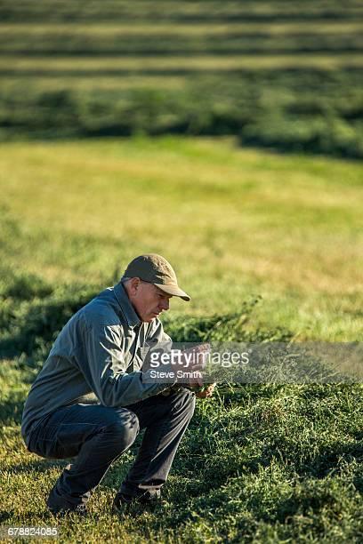 Caucasian farmer crouching in field checking crop