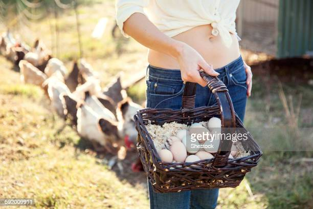 caucasian farmer gathering chicken eggs on farm - grupo mediano de animales - fotografias e filmes do acervo