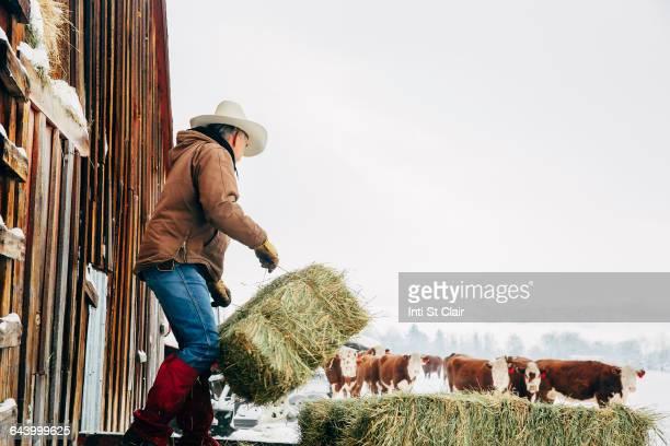 Caucasian farmer hauling hay near snowy barn