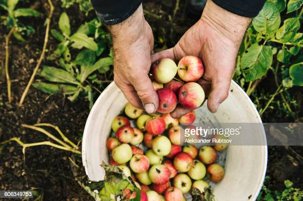 Caucasian farmer holding fruit