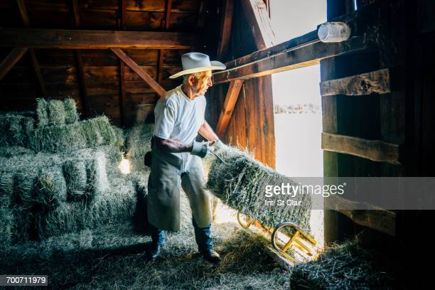Caucasian farmer in barn pulling bale of hay