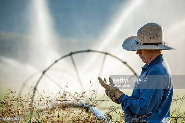 caucasian farmer near barbed wire fence checking glove - irrigation equipment stock pictures, royalty-free photos & images