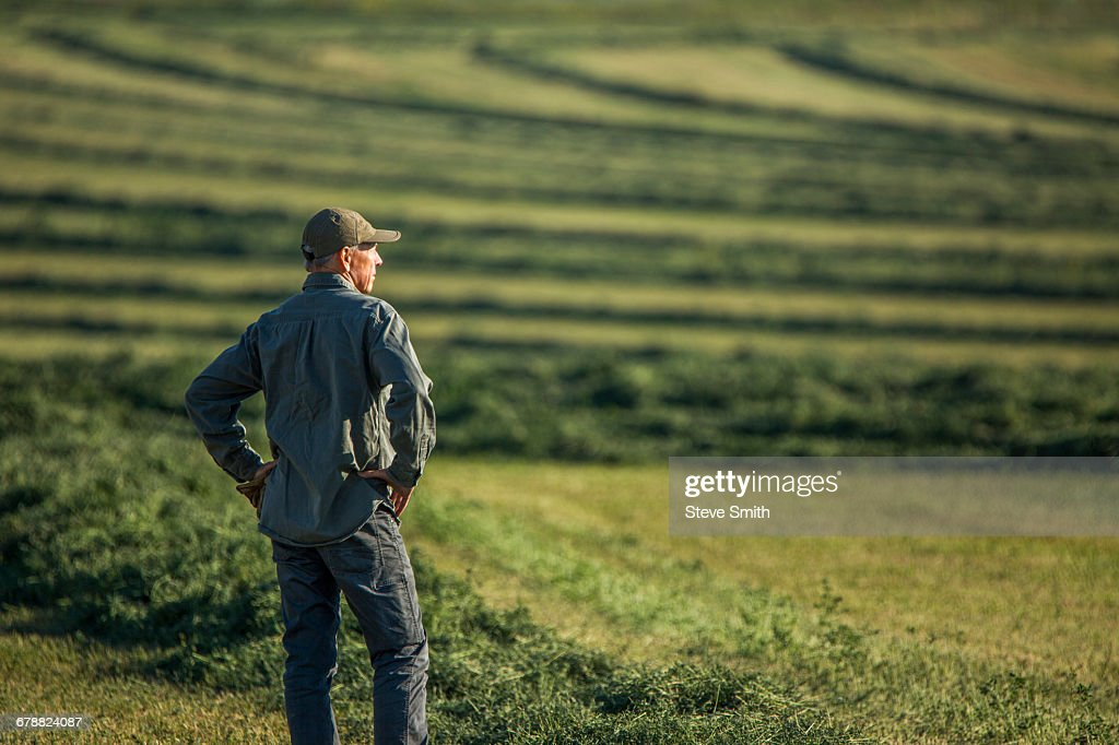 Caucasian farmer standing in field checking crop : Stock Photo