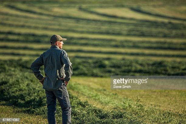 caucasian farmer standing in field checking crop - produtor - fotografias e filmes do acervo
