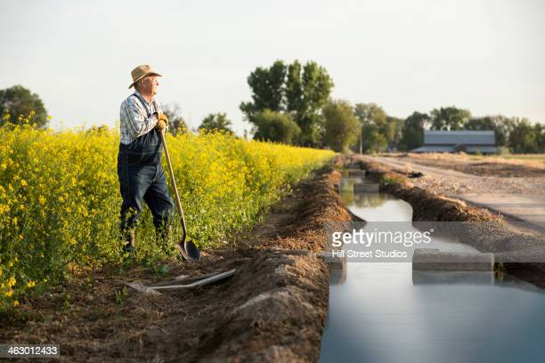 caucasian farmer standing in mustard field next to irrigation ditch - irrigation equipment stock pictures, royalty-free photos & images