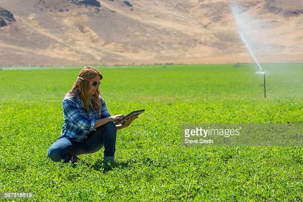 Caucasian farmer using digital tablet in field