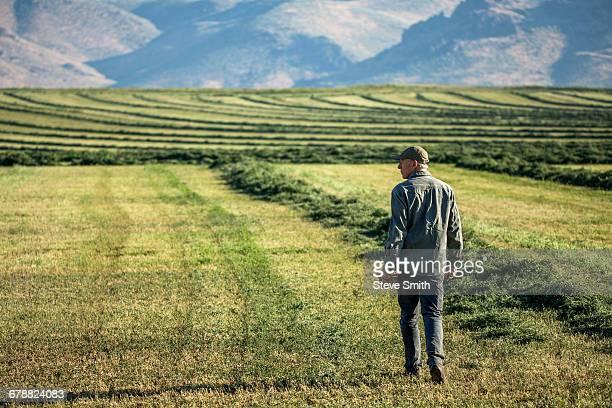 Caucasian farmer walking in field checking crop