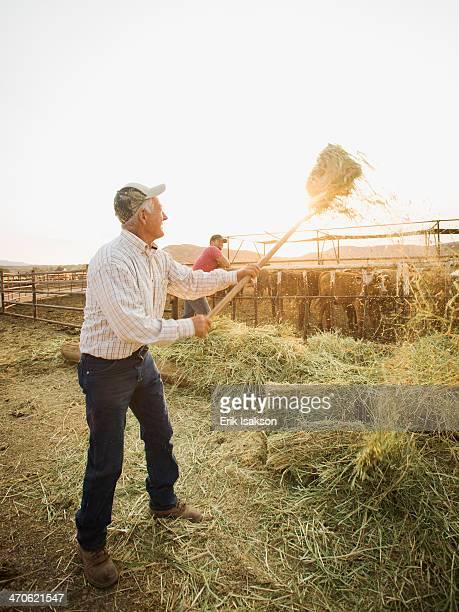 Caucasian farmers forking hay