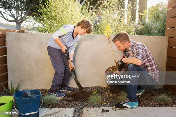 Caucasian father and son digging with shovel in garden
