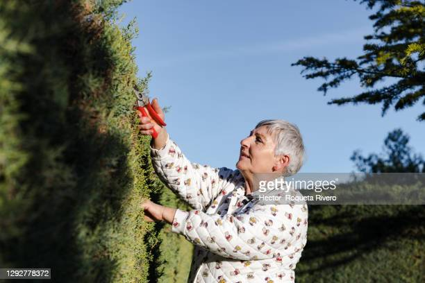 caucasian female senior citizen cutting her garden hedge with red scissors - cutting stock pictures, royalty-free photos & images