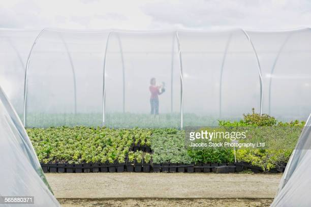 caucasian gardener examining plants in greenhouse - spalding england stock photos and pictures