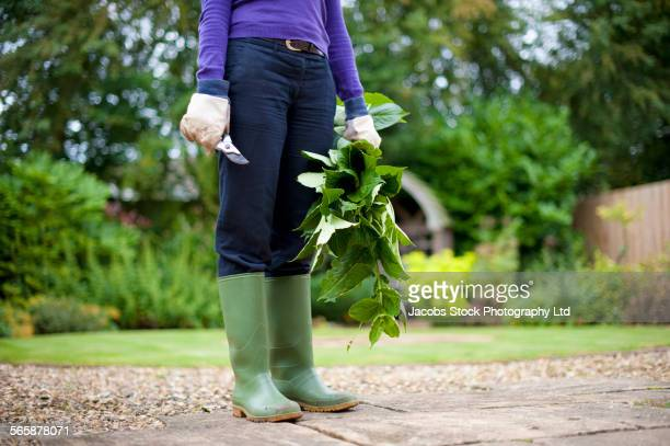 Caucasian gardener holding clippings in backyard