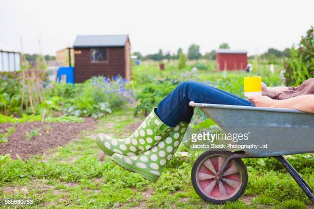 caucasian gardener laying in wheelbarrow in garden - wheelbarrow stock photos and pictures