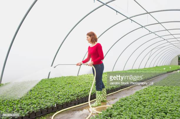 Caucasian gardener watering plants in greenhouse