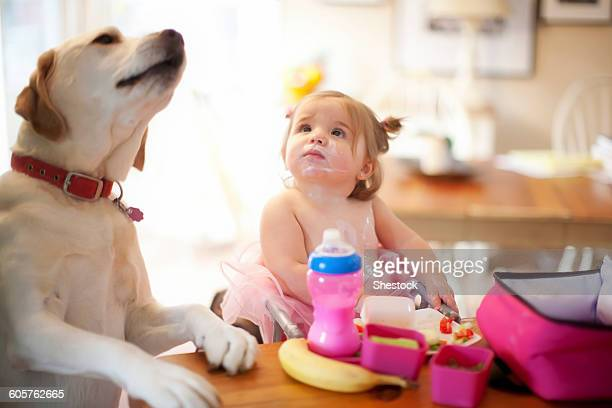 caucasian girl and dog eating at table - dog eats out girl stock photos and pictures