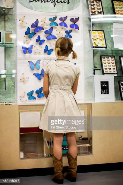 Caucasian girl examining butterfly specimens in museum