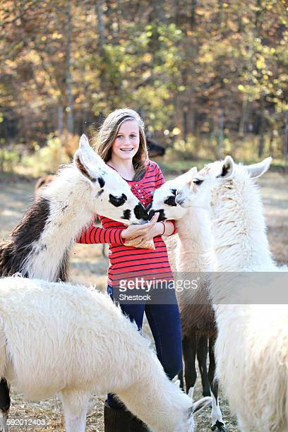 Caucasian girl feeding livestock on farm